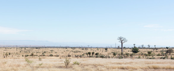 Typical view of the south of Madagascar