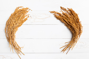 Paddy rice on white wood background. ears of paddy rice