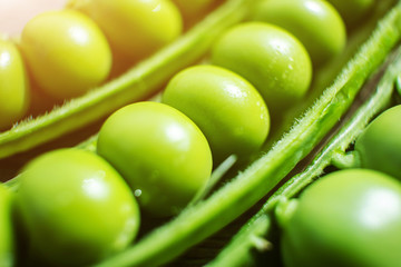 Peas in a pod close-up. Fresh pea harvest, macro photo. Concept of organic healthy wholesome vitamin food.