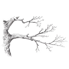 Tree branch. Hand drawn sketch style illustration of tree branch without leaves. Isolated on white background