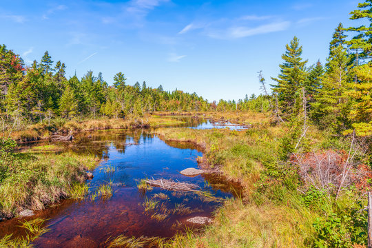 Mansell Brook in autumn.Piscataquis County.Maine.USA