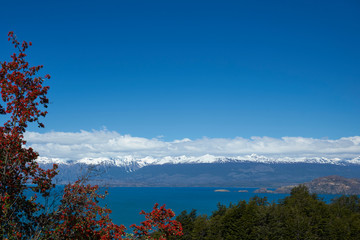 Flowering flame bushes along the Carretera Austral next to the azure blue waters of Lago General Carrera in Patagonia, Chile