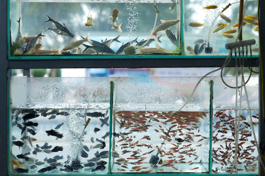 A large number of small fish of various species in aquarium pet shop