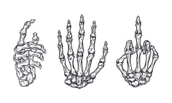 hand bones set vector illustration with vintage style outline