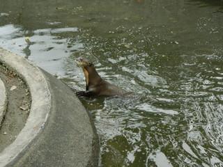 Foto paisaje parque ciudad y animales