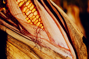 Close-up picture of a ear of corn
