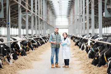 Two confident workers of large contemporary dairy farm standing on long aisle