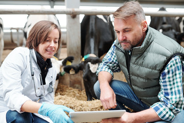 Young veterinarian and worker of dairy farm looking through online data