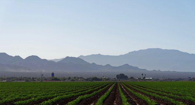 Farmland near Marana, Pima County, Arizona