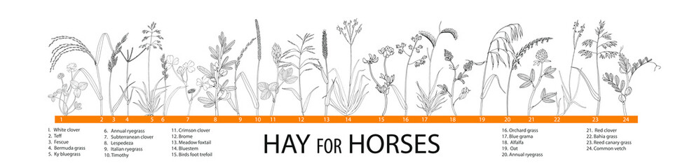 Vector illustration of  hay plants for horses - big set.