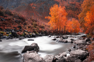 Printed kitchen splashbacks Forest river Yellow autumn forest and river in the mountains. Altai, Siberia, Russia. Long exposure shoot