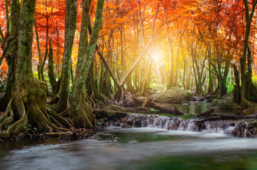 Forest in autumn with river and waterfalls. There are beautiful rivers and waterfalls in the autumn forest. Wild Autumn with beautiful rivers and waterfalls.