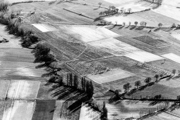 Aerial view of meadows and trees with their shadows