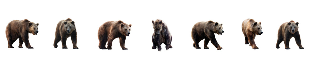 Set of brown bear over white background