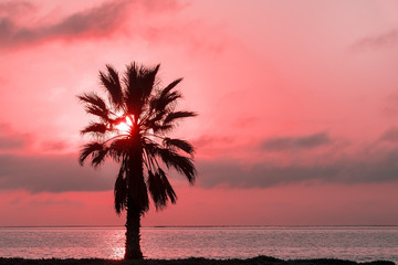 Palm tree, heavy dramatic clouds and bright sky. Beautiful African sunset over the lagoon.