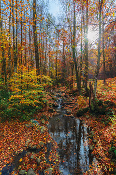 water stream among the rocks in the forest. great autumnal scenery. sun behind the  colorful foliage on the trees. wonderful sunny weather.