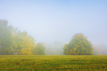 trees on the grassy meadow on a foggy morning. wonderful early autumn scenery. beautiful nature background