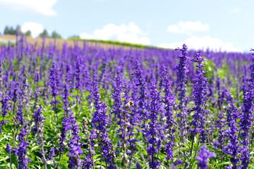 Printed roller blinds Lavender Lavender Garden