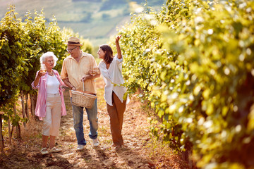 Family walking in between rows of vines.
