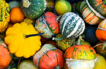 Colorful pumpkins as a background.Autumn harvest, Halloween or Thanksgiving concept.Selective focus.