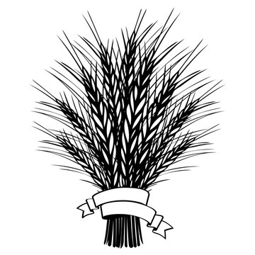 Barley or wheat ears bundle with ribbon on white. Black and white hand drawn sketch illustration for bakery, tags or labels design