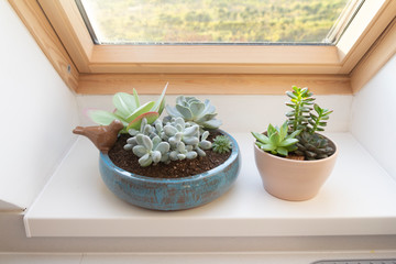 various succulent plants on window sill