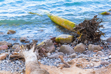 Wilderness Beach After Storm / Huge uprooted fallen trees at stony coast of Ruegen island, Germany