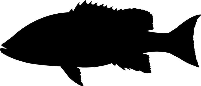 Silk Snapper Fish Silhouette Vector