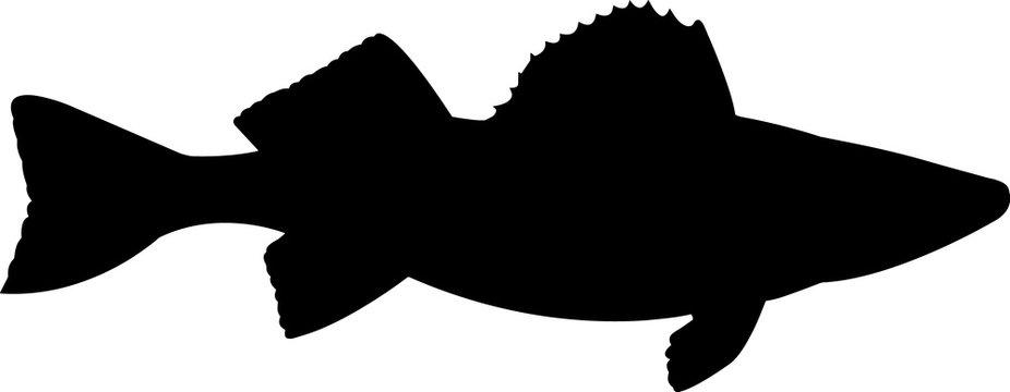 Walleye Pike Fish Silhouette Vector
