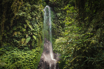 Beautiful waterfall in tropical forest of Bali, Indonesia Wall mural