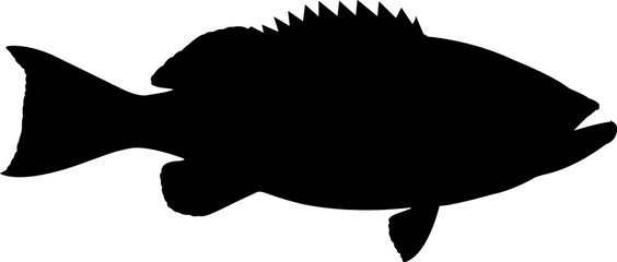Yellowfin Grouper Fish Silhouette Vector