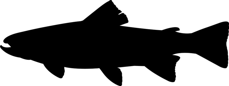 Trout Fish Silhouette Vector
