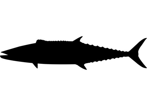 Kingfish Fish Silhouette Vector