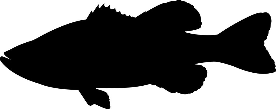 Largemouth Bass Fish Silhouette Vector