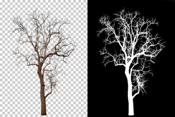 single tree on transparent picture background with clipping path, single tree with clipping path and alpha channel on black background large images are suitable for all types of art work and print.