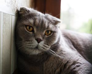 Gray cat resting on the windowsill.