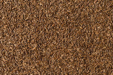 Fototapeta Dried caraway texture. Background with copyspace. Close up. Top view obraz