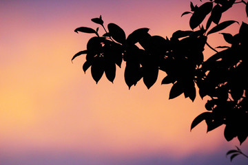 Simple silhouette of tree leaves against a blank purple and orange sunset sky background