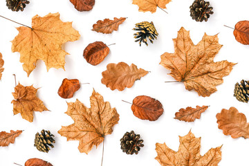 Autumn composition. Dry leaves of maple, oak and cones on white. Orange leaves of different shapes. Autumn background. View from above