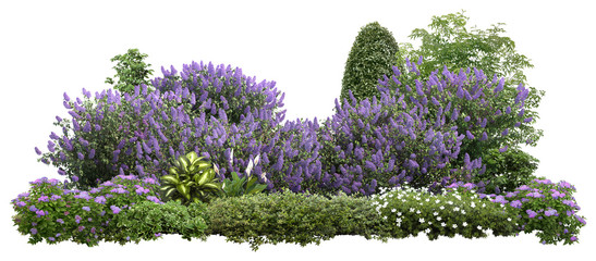 In de dag Lilac Flower Hedge isolated on white background. Garden design. Lilacs flowers and green plants for landscaping. High quality cutout for professional composition