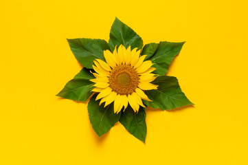 Fotomurales - Beautiful fresh sunflower with green leaves on bright yellow background. Flat lay, top view, copy space. Autumn or summer Concept, harvest time, agriculture. Sunflower natural background. Flower card