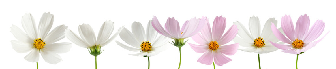 isolated image of beautiful  flowers close-up