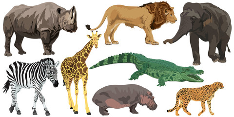 Set of African animals Wall mural