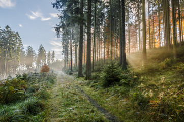 Misty morning in autumn in the forest with sunbeams and lots of spider webs, Germany