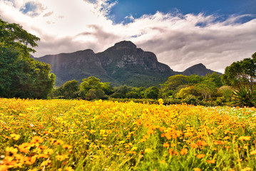 Wildflowers in a beautiful valley with mountain and clouds