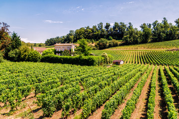 Vineyards of Saint Emilion, Bordeaux, Aquitaine region of France, in a sunny summer day.