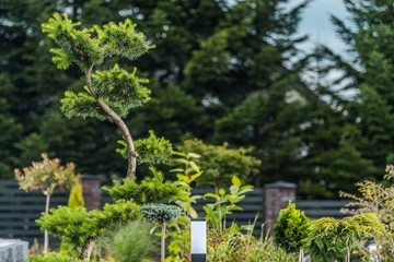 Exotic Garden Trees