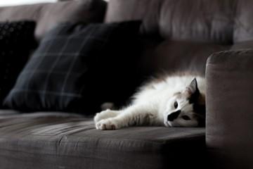 White cat lying on sofa sad with open eyes dark background