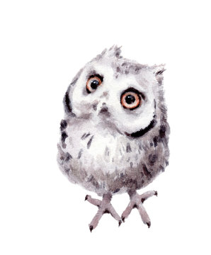 Baby Owl Watercolor Hand Painted Wild Bird Illustration isolated on white background