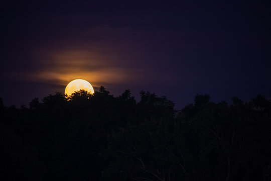 Moonrise of orange autumn harvest moon rising above treelined area